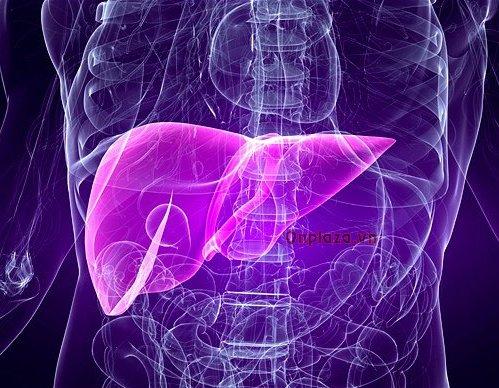 gan trong cơ thể người