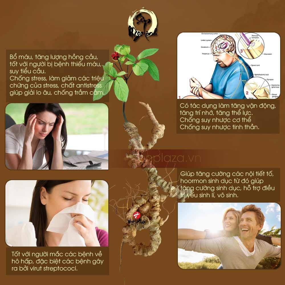 Giá trị chữa bệnh của sâm Ngọc Linh tốt nhất thế giới 7