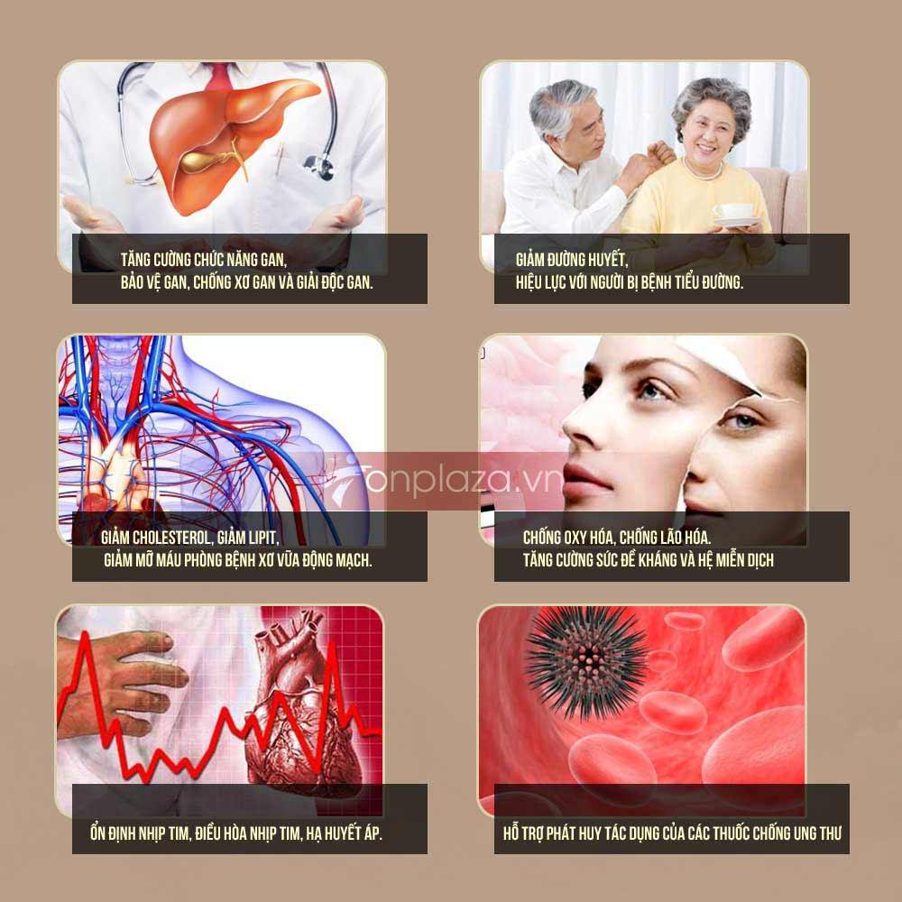 Giá trị chữa bệnh của sâm Ngọc Linh tốt nhất thế giới 8