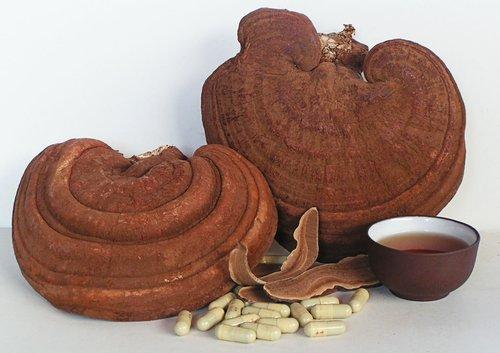 Tác dụng của nấm linh chi đỏ thái lát Hàn Quốc với sức khỏe