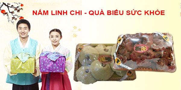 Nấm linh chi Hàn Quốc- món quà biếu sang trọng