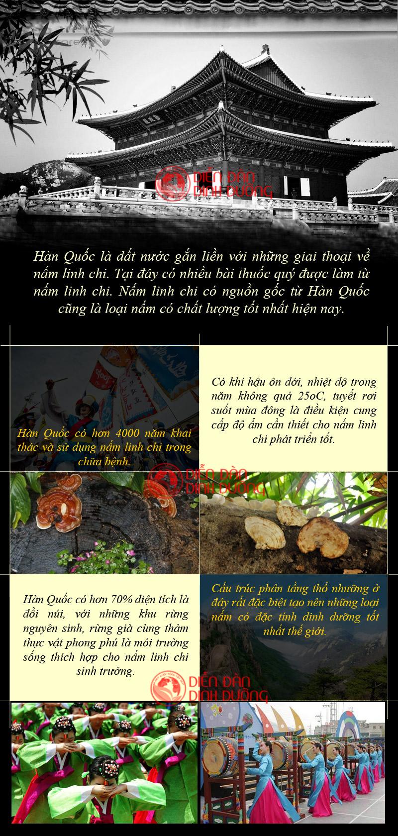 Tác dụng chữa bệnh của nấm linh chi Hàn QuốcTác dụng chữa bệnh của nấm linh chi Hàn Quốc