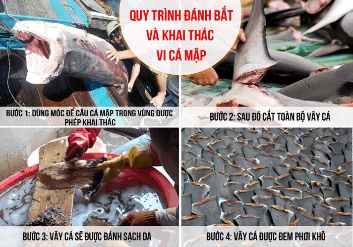 Tìm hiểu công dụng của vi cá mập 3