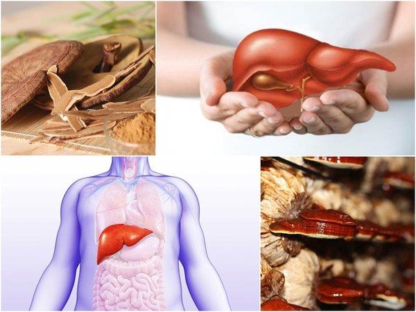 Công dụng đặc biệt của nấm linh chi Hàn Quốc với bệnh gan